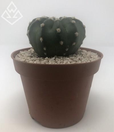 Cactus 0002