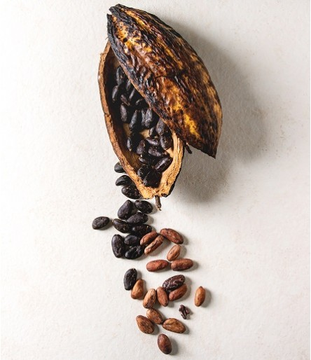 Cacao & Cocoa