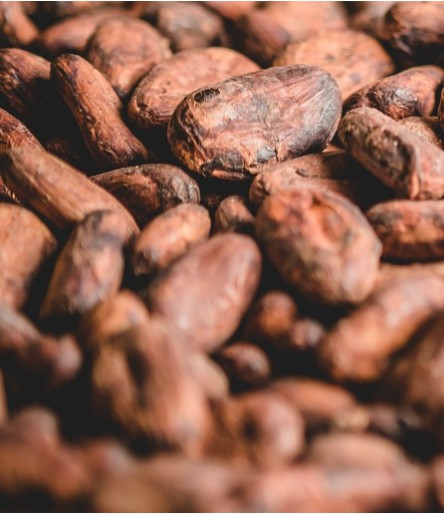 Cacao B2B